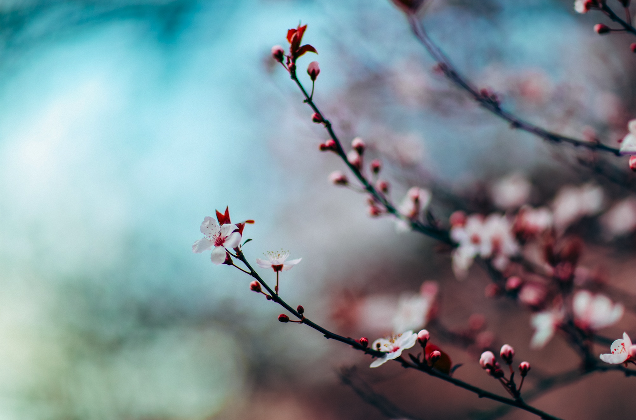 Spring – Self Care With Traditional Chinese Medicine